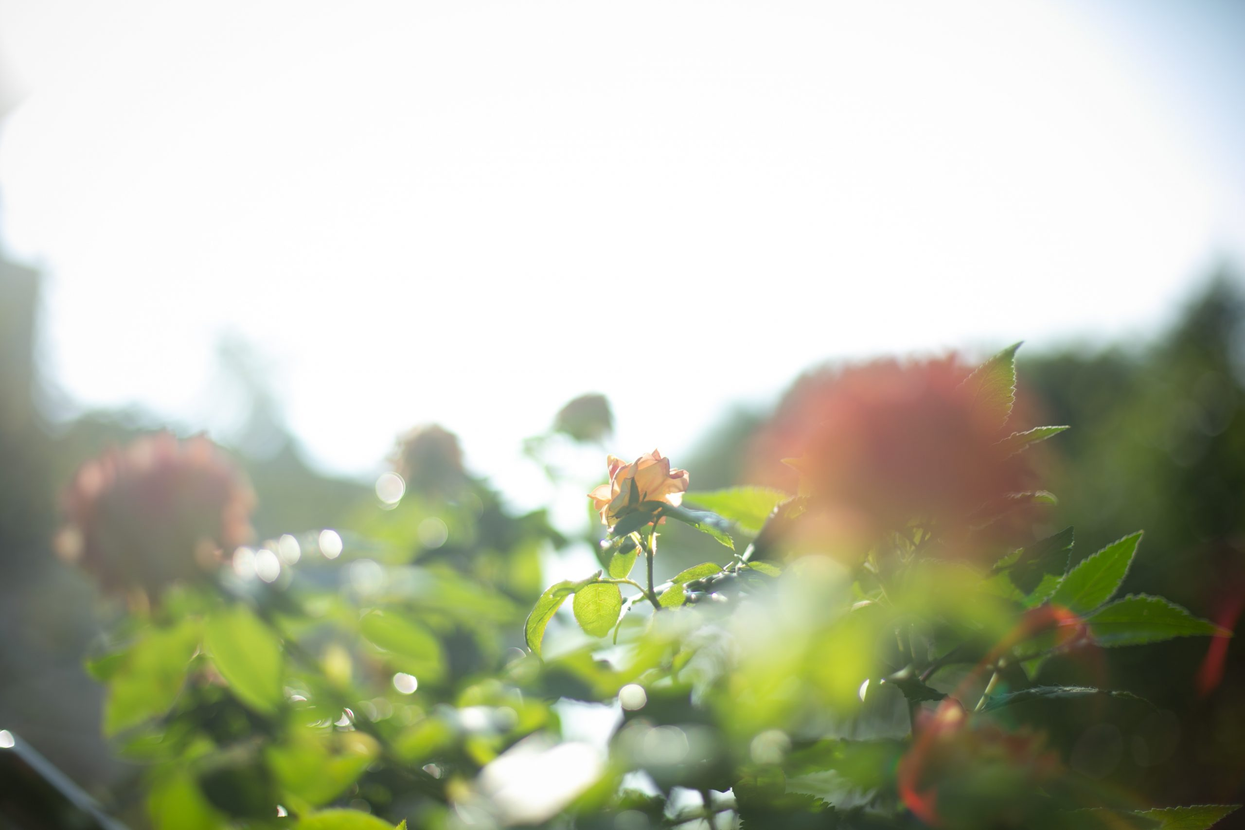 庭にハーブが咲き集う異人館で温かな家族婚